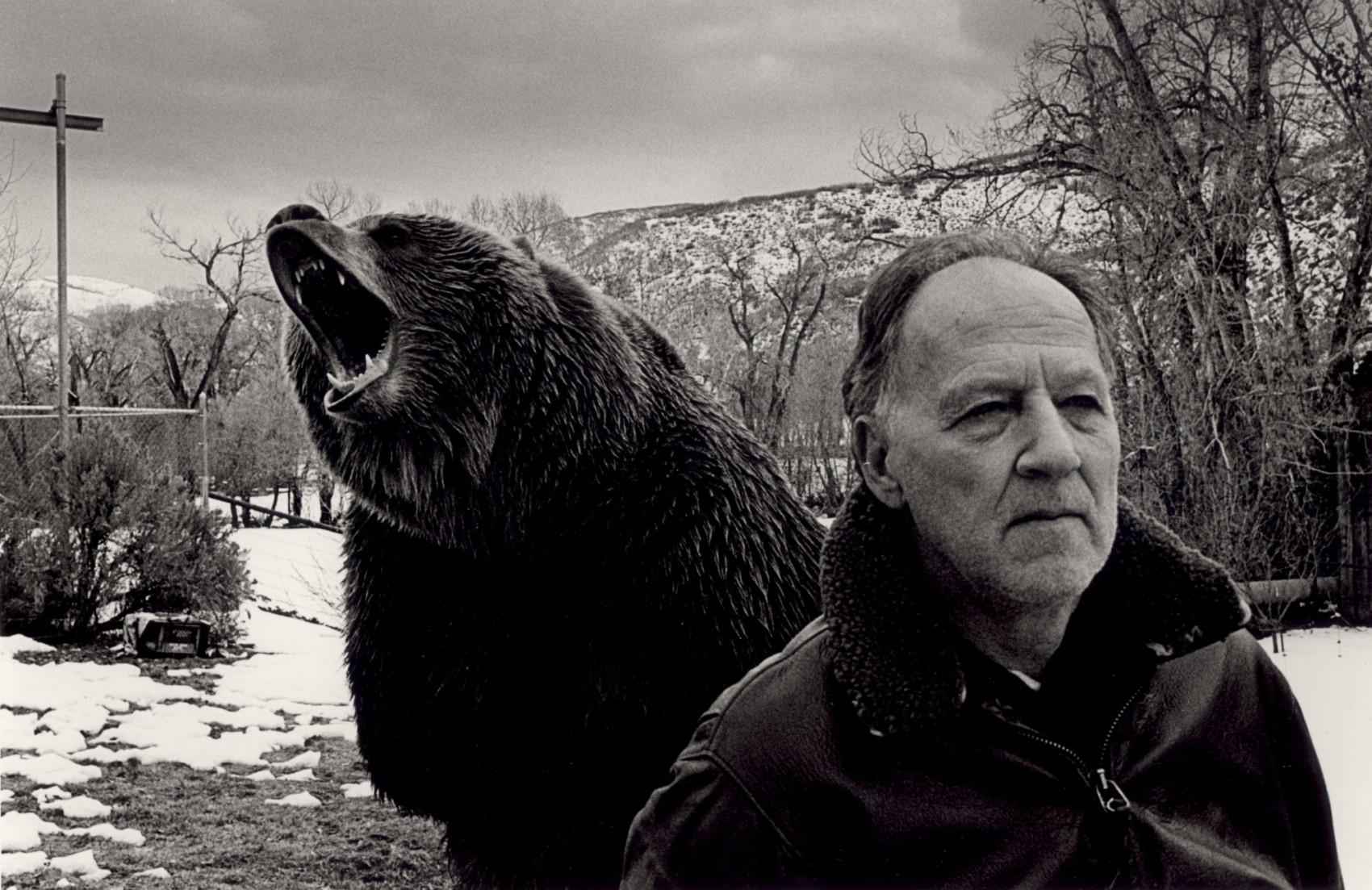 herzog grizzly