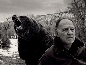 herzog grizzly